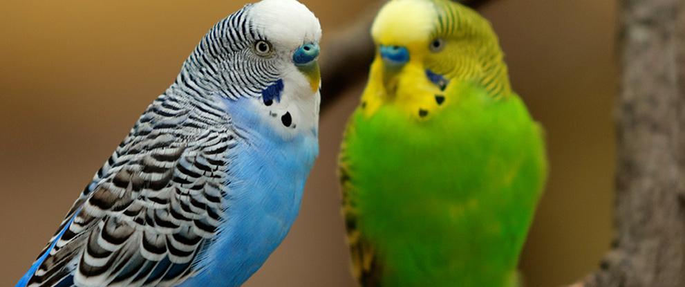 qu son aves y peces ornamentales f brica y